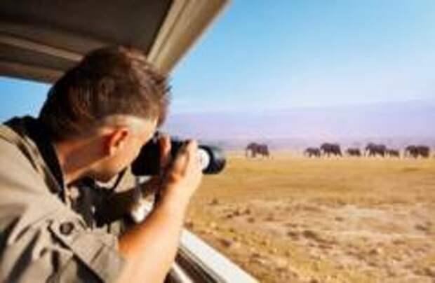 Девять лайфхаков для идеального фотографирования дикой природы
