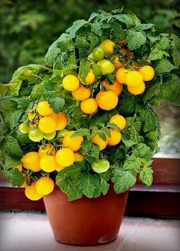 Что можно вырастить на балконе? 6 видов растений, которым нужен лишь горшок
