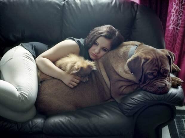 После этих фото вам наверняка захочется завести собаку