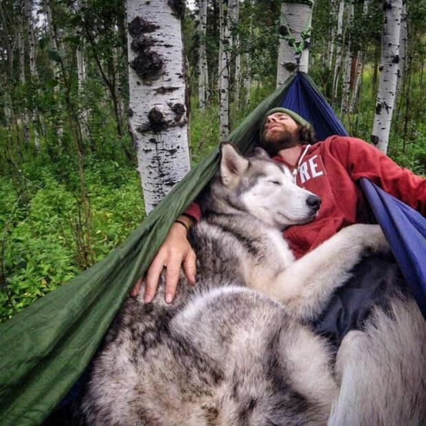Собака - чудо природы!!!