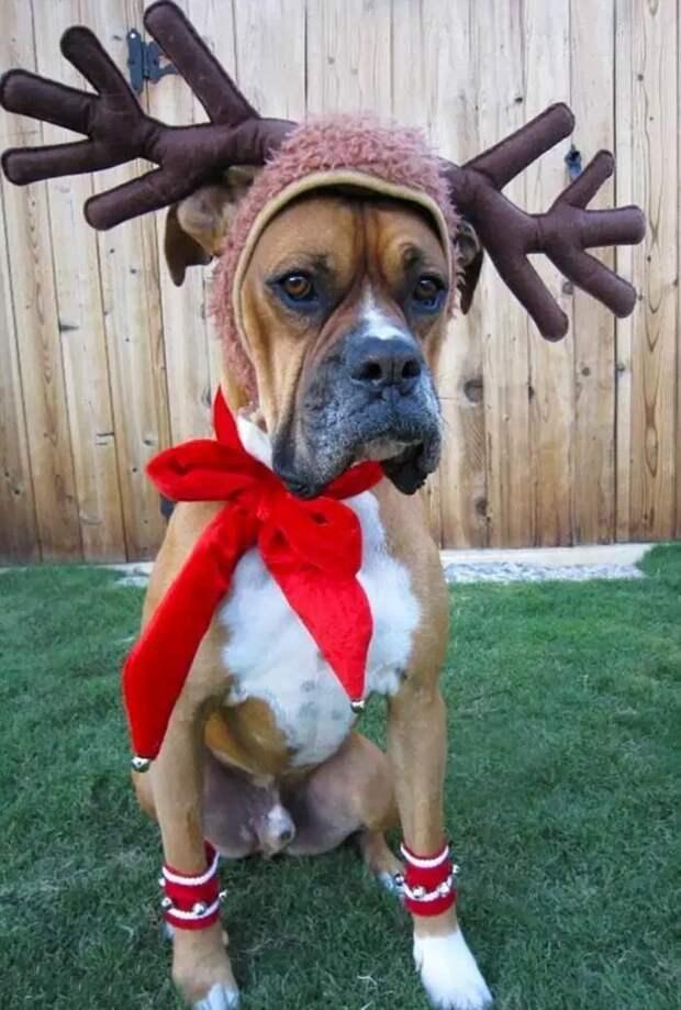 Обидно, знаете ли животные, не любят, новый год, планы, смешные, фото
