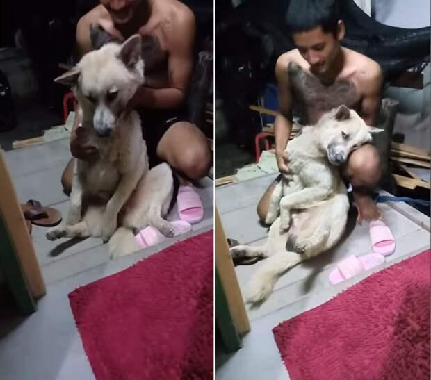 Собака притворилась бездыханной, чтобы избежать купания