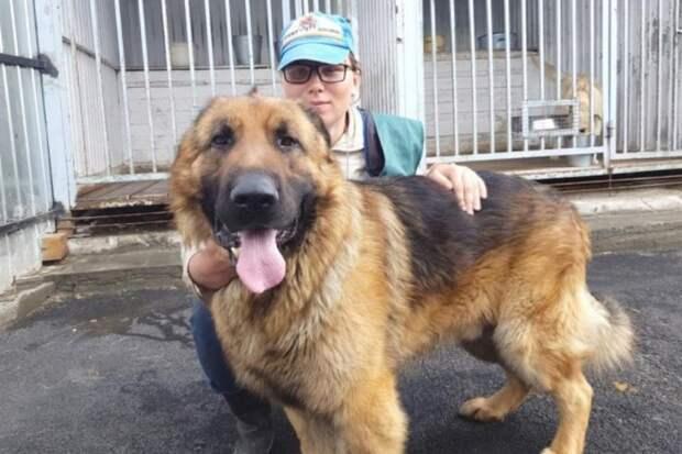 Огромный пес прибился к территории завода: он нуждался в любви