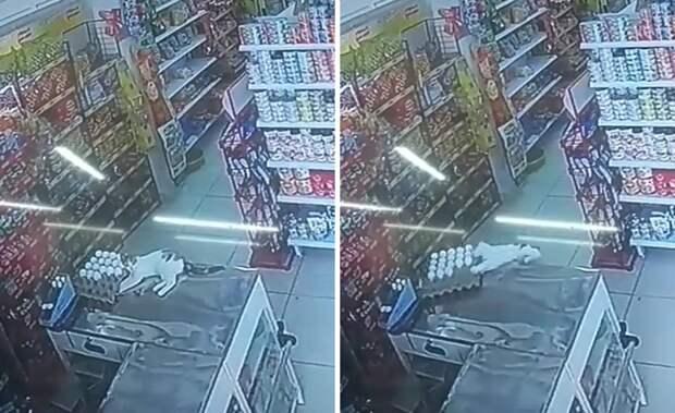Васька-разрушитель: кот свалился с прилавка и устроил бардак в магазине