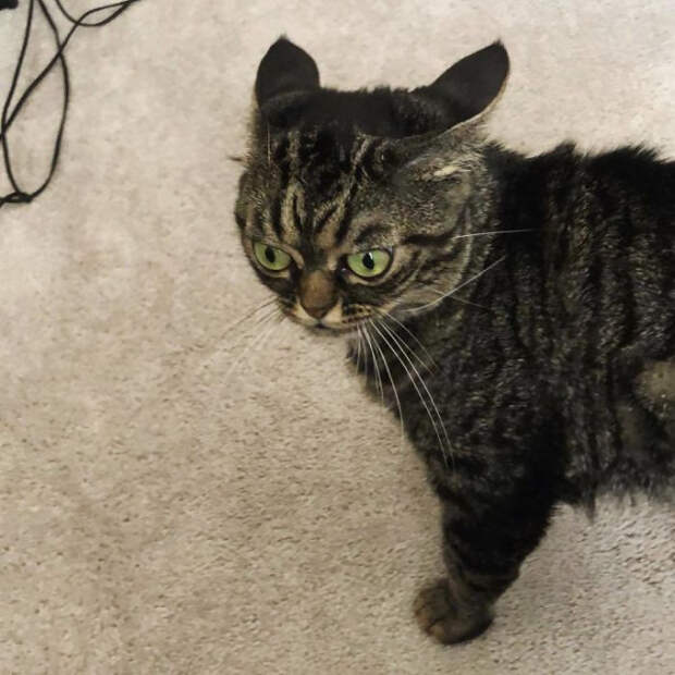 Ещё одна сердитая кошка