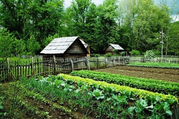 За разведение огорода можно получить штраф