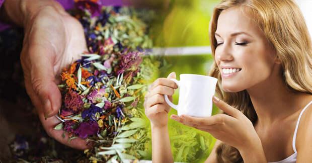 5 лекарственных растений помогающие снять стресс и успокоить