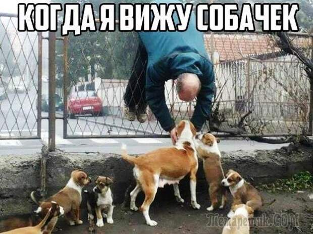 Прикольные фотомемы от Михалыча!