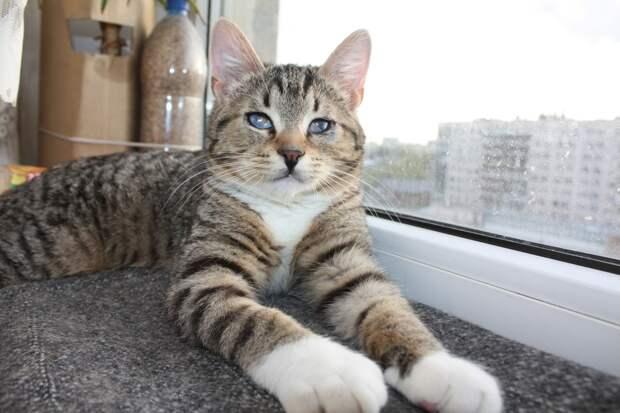 Молодой, здоровый, игривый, воспитанный! Такой кот в доме очень нужен!)