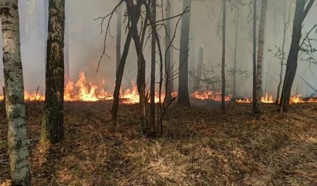 Самый крупный лесной пожар потушили в Юргинском районеТюменской области