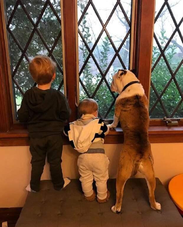 Дети и собака смотрят в окно