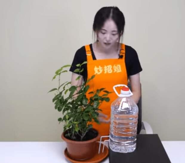 Простая поилка-поливалка для цветов