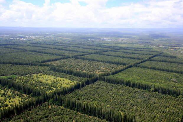 Надписи делали посредством посадки или вырубки деревьев / Фото: maps.livejournal.com