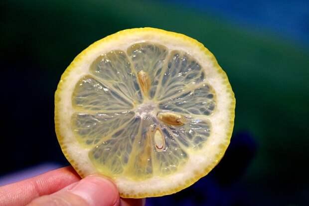 факты о лимонах, о которых не знают