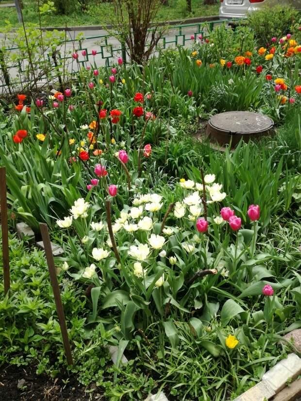 Майский сад
