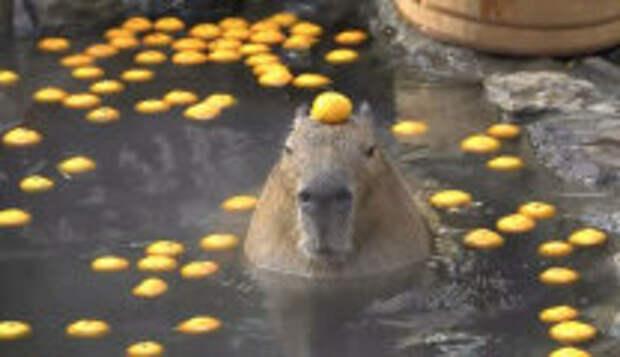 Фотография: 20+  забавных фотографий животных, не поддающихся рациональному объяснению