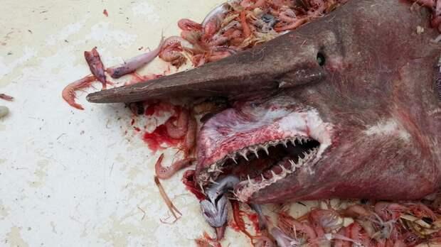 Кто проживает на дне океана: странные существа, найденные в бездне