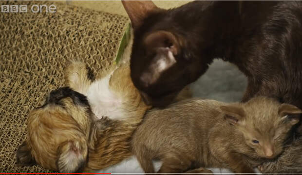 От этого щенка отказалась мама. Смотрите невероятное чудо усыновления!