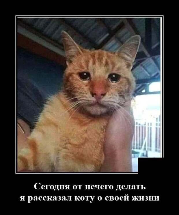 Демотиватор про жизнь и кота