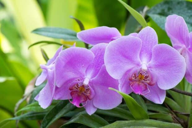 Как организовать уход за орхидеями: 5 толковых советов
