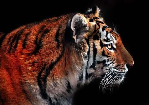 Великолепные моменты из мира животных