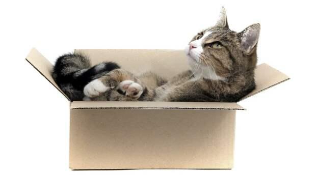 Необъяснимая страсть: почему кошки любят сидеть в коробках