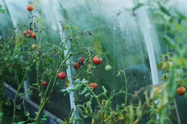 Самодельный парник и овощи на клумбах. Топ-7 секретов для дачников