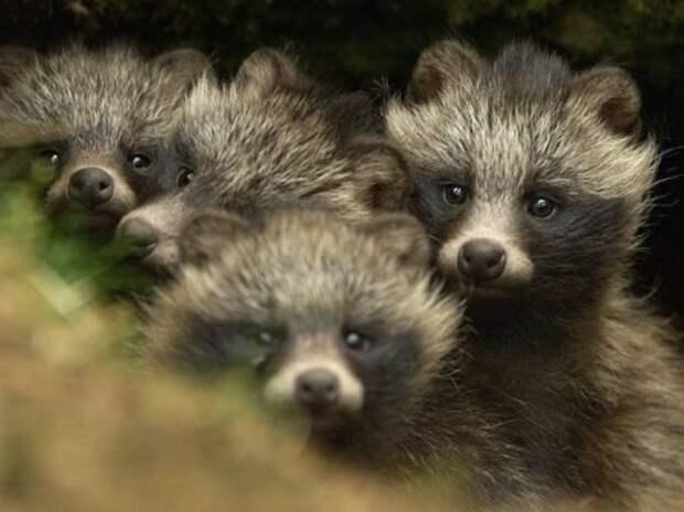 Необычные животные