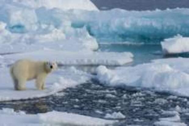 В Арктику можно привлекать студентов по обмену и медицинских туристов