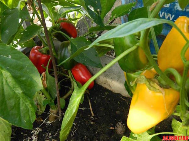Природные удобрения сохраняют мой урожай здоровым