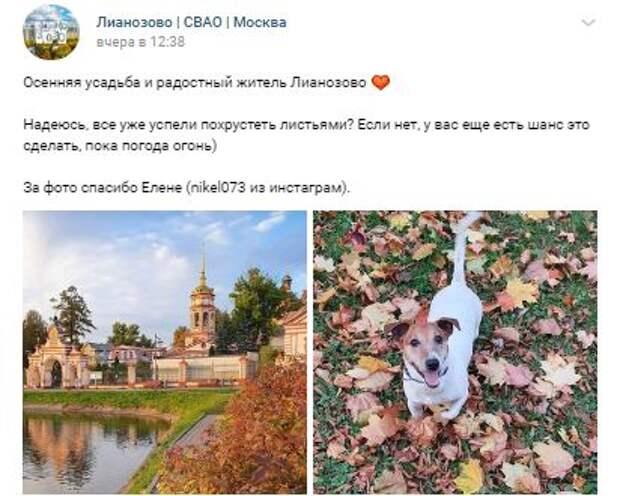 Похолодание не повлияло на режим прогулок собак в Лианозове