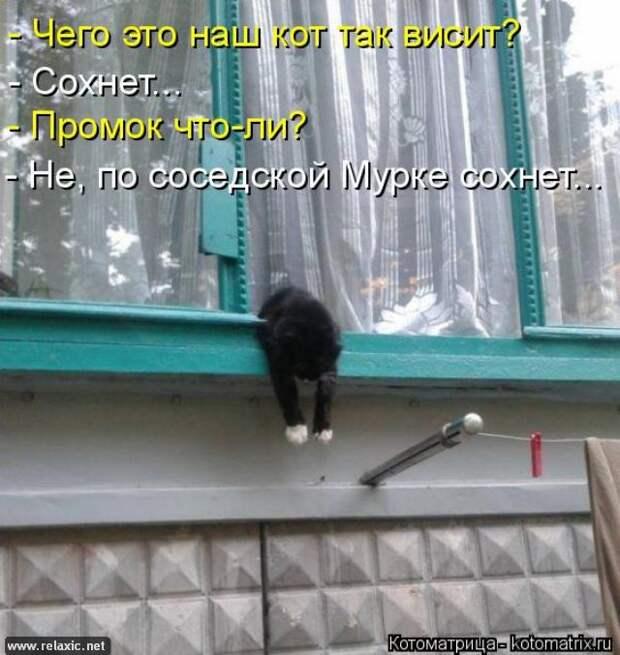 Котодром - 21 от Михалыча