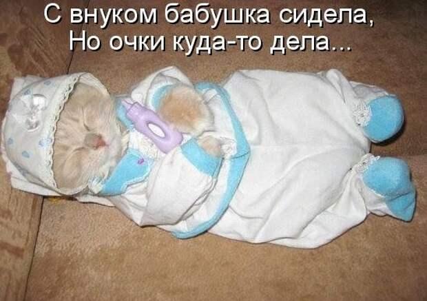 1450431440_kotomatrica-6