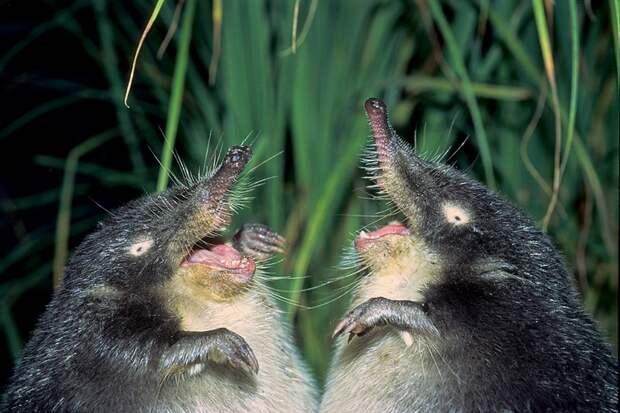 Тест: Сможете угадать хотя бы 5/10 экзотических животных?