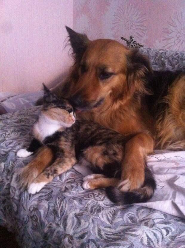 Котёнок ничего не видел и почти не мяукал… Но девушка смогла его спасти!