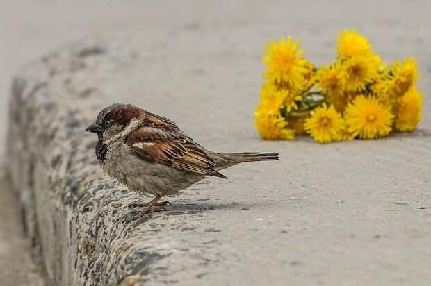 Снова не пришла голубка, я взволнован не на шутку... Фото: Андрей ПОЛЯКОВ