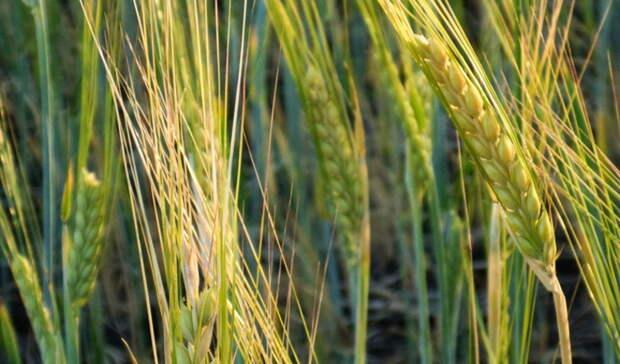 Аграрии Оренбуржья приобрели более 97 тыс. тонн минеральных удобрений