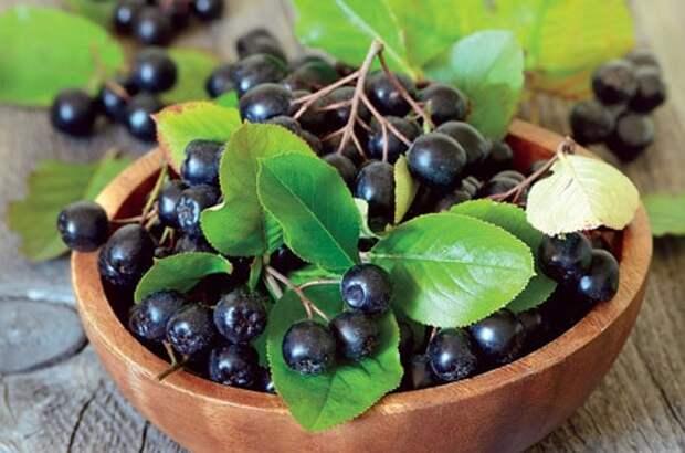 Лечебные свойства ягод черноплодной рябины
