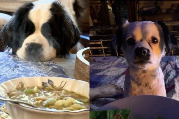 10+ фото собак, которые мечтают о еде хозяев и не планируют это скрывать