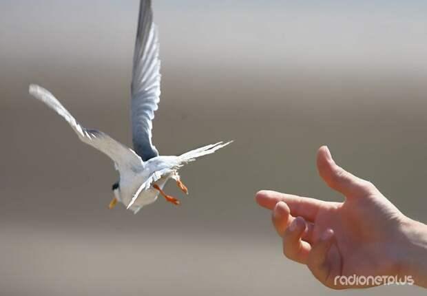 Сделаем мир добрее! Подборка добрых эмоциональных фотографий (56 фото)