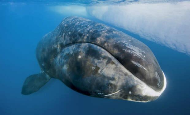 10 существ живущих гораздо дольше человека