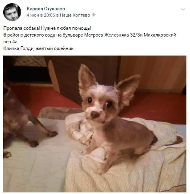 Пес-беглец с 3 го Михалковского был пойман на бульваре Матроса Железняка