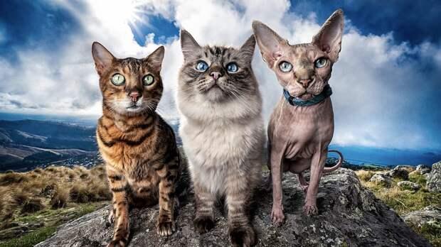 Названы породы кошек, которые живут дольше других