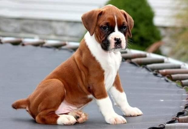 Про пса, гаражные ворота и преодоление препятствий…
