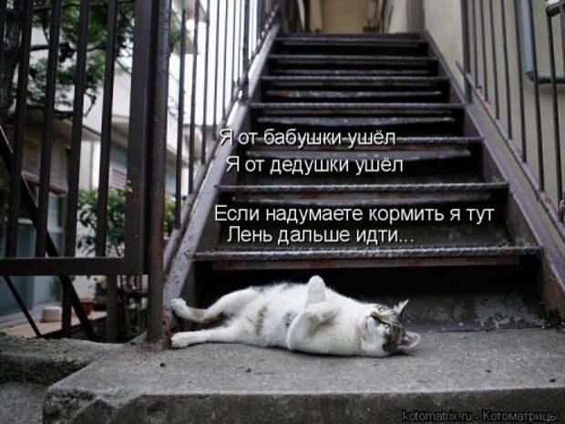 1556890830_kotomatricy-15 (500x375, 136Kb)