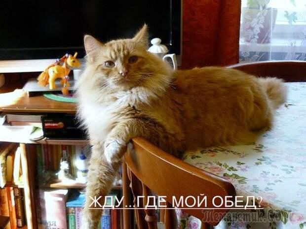 Котодром - 23 от Михалыча