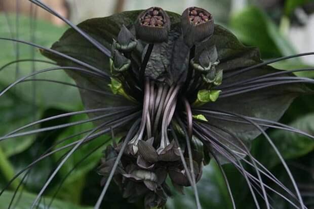 Жуткие и реальные растения (18 фото)