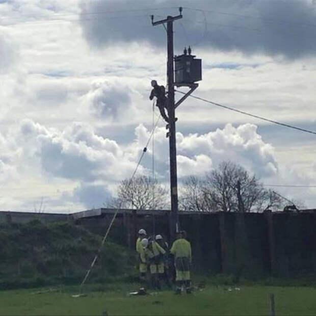 Рабочие ремонтируют повреждённую быком Роном линию электропередачи. Фото: Hazel Laughton