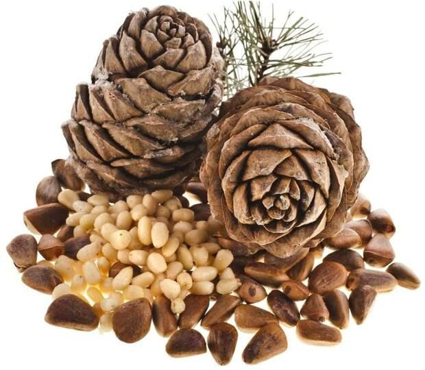 Почему семена кедра никто не ест, и что мы едим, принимая за кедровые орешки