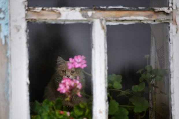 Три проблемы с ремонтом, о которых не знают покупатели жилья